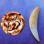 קמע שן הנמר - מתנה לגבר